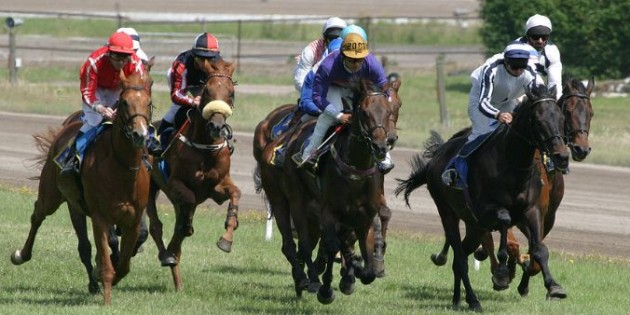 Why people lose money with horse racing horse racing systems publicscrutiny Gallery